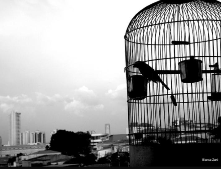 Mais uma sobre aves