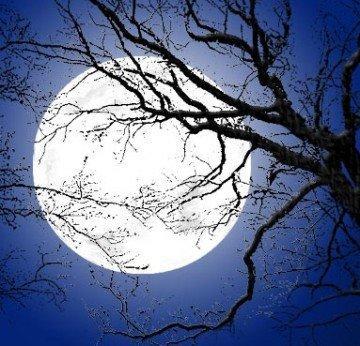 Dogmos Luna