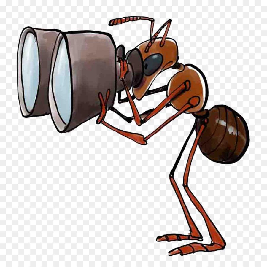 O Asilo Das Formigas