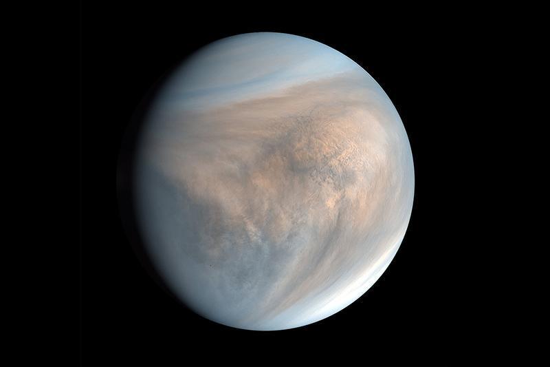 Octa Vênus