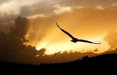 Vôo do pássaro