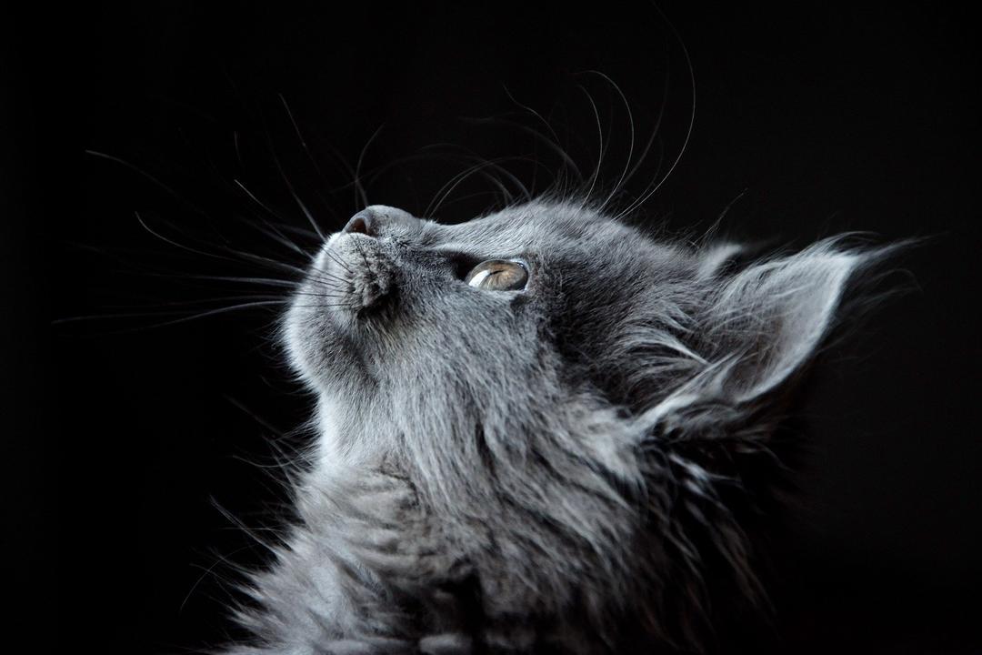 Sombra, meu gato