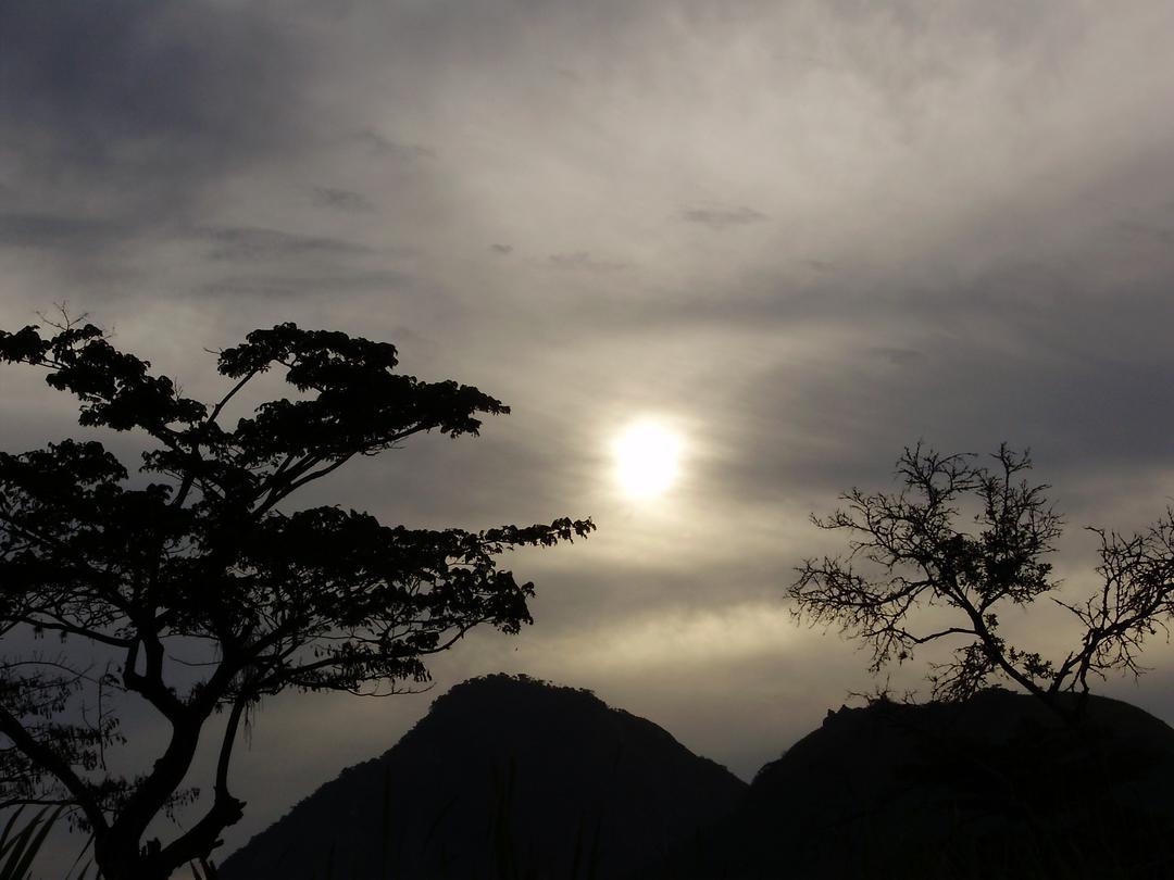 filosofia à sombra de uma mangueira
