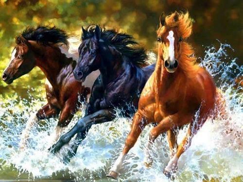 Carruagens - A arte de Cavalos