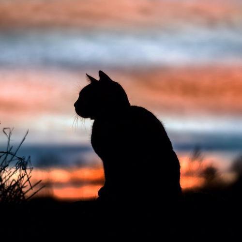 As Carruagens Noturnas e o Camafeu Felino