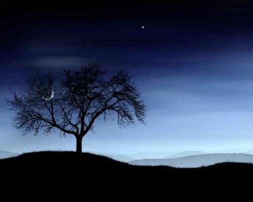 O Lenço da Noite em orvalho