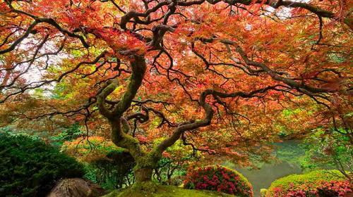 A árvore que entoava receios